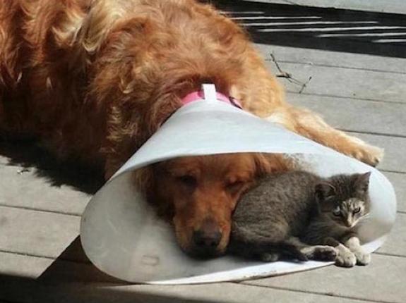 Gute Freunde